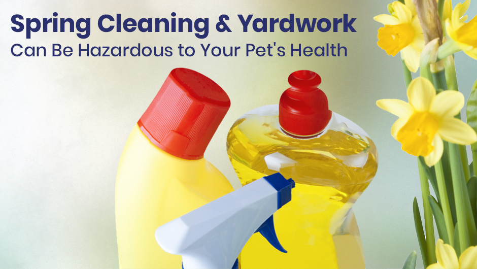 Spring Cleaning and Yardwork Can Be Hazardous to Your Pet's Health