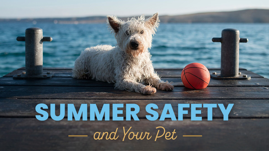 Summer Safety and Your Pet