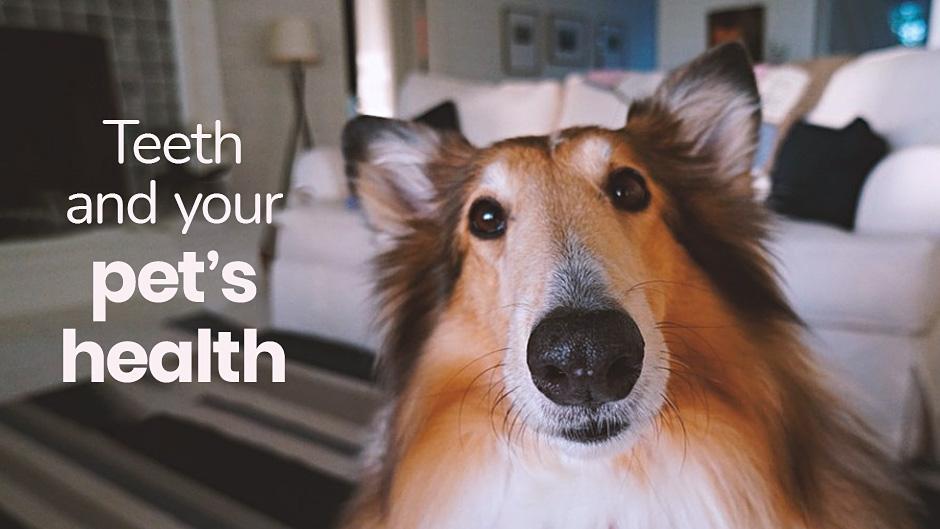Teeth & Your Pet's Health