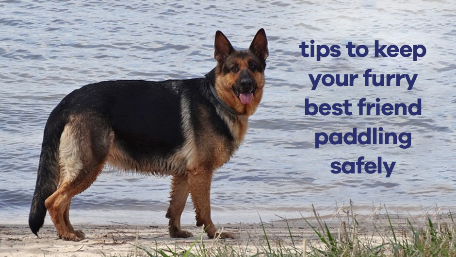 Tips to Keep Your Furry Best Friend Paddling Safely