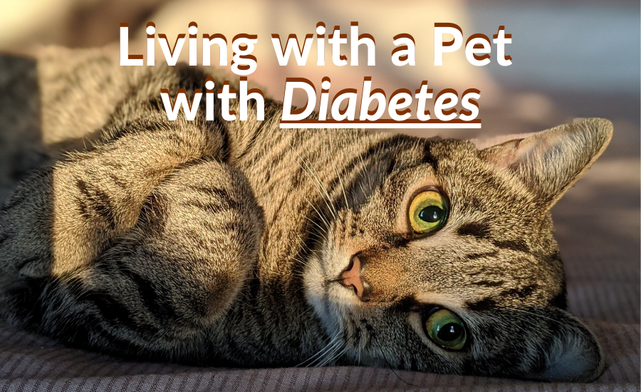 Living with a Pet with Diabetes