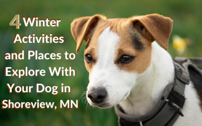 4 Winter Activities and Places to Explore With Your Dog in Shoreview, MN