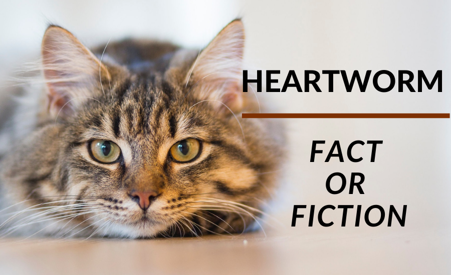 Heartworm: Fact or Fiction