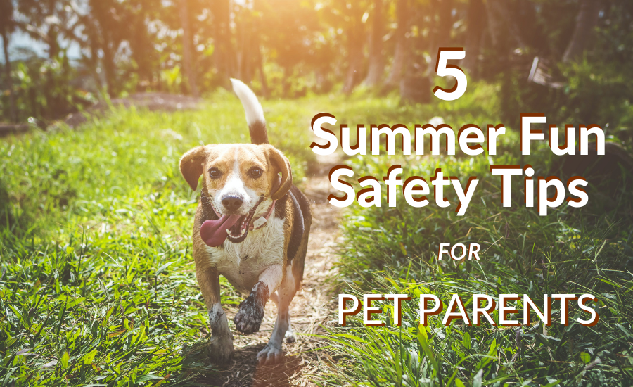 5 Summer Fun Safety Tips for Pet Parents