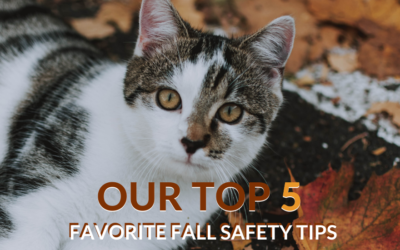 Our Top 5 Favorite Fall Safety Tips