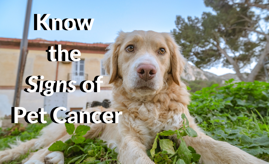 Know the Signs of Pet Cancer