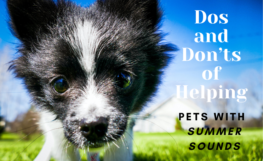 Dos and Don'ts of Helping Pets with Summer Sounds