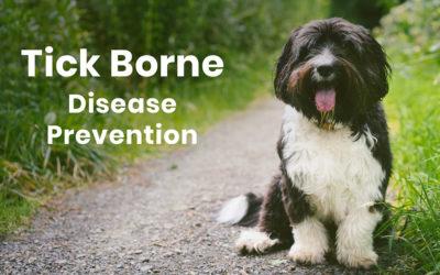 Tick Borne Disease Prevention