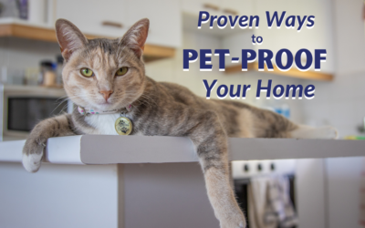 Proven Ways to Pet-Proof Your Home