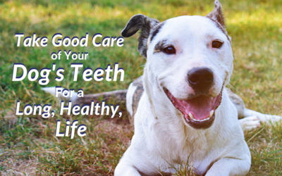 Take Good Care of Your Dog's Teeth For a Long, Healthy, Life